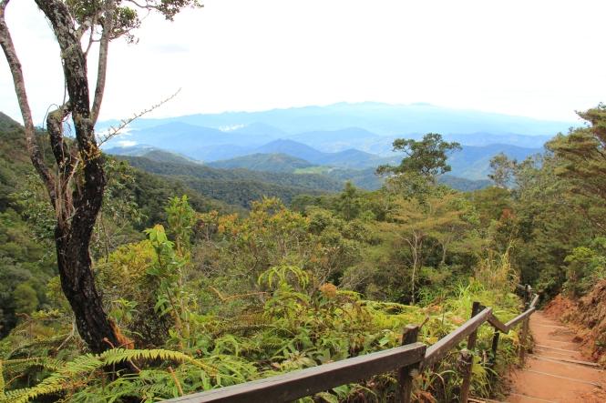 Borneo 481