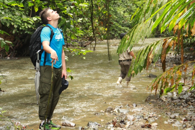 Henri trying to find the shy orangutan again/